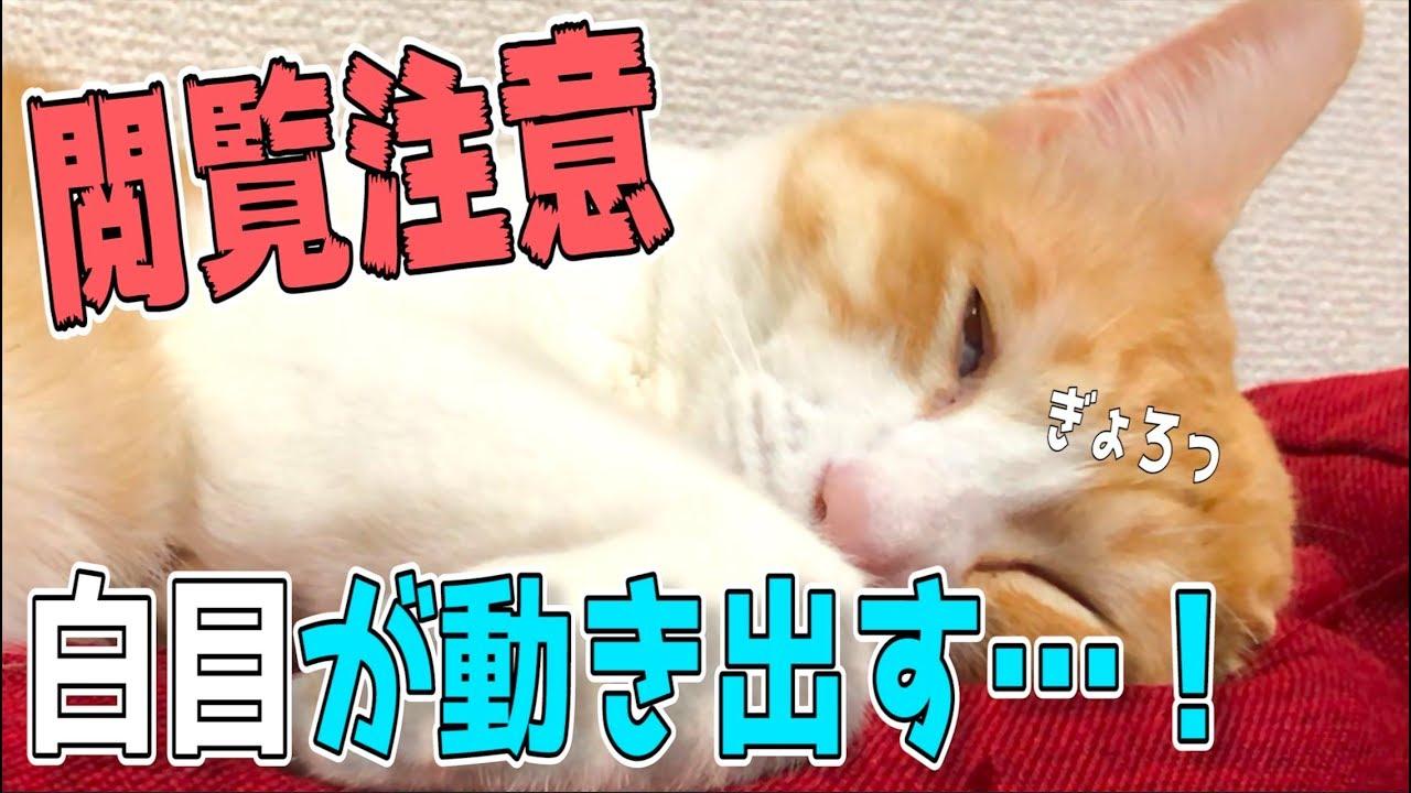 【閲覧注意】目を開けて寝てる猫の眼球が突然動きまくる…!!