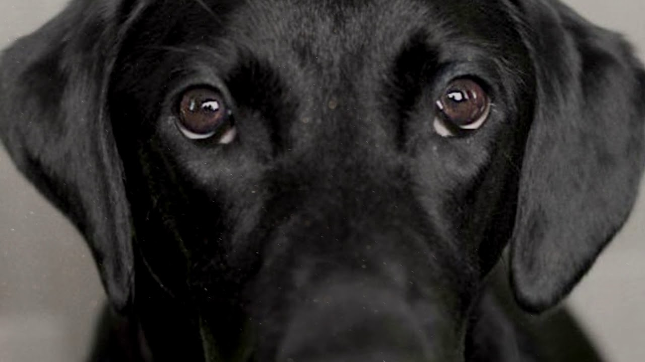 Ο σκύλος μου δε σταματά να με κοιτάει. – Ιστορία.