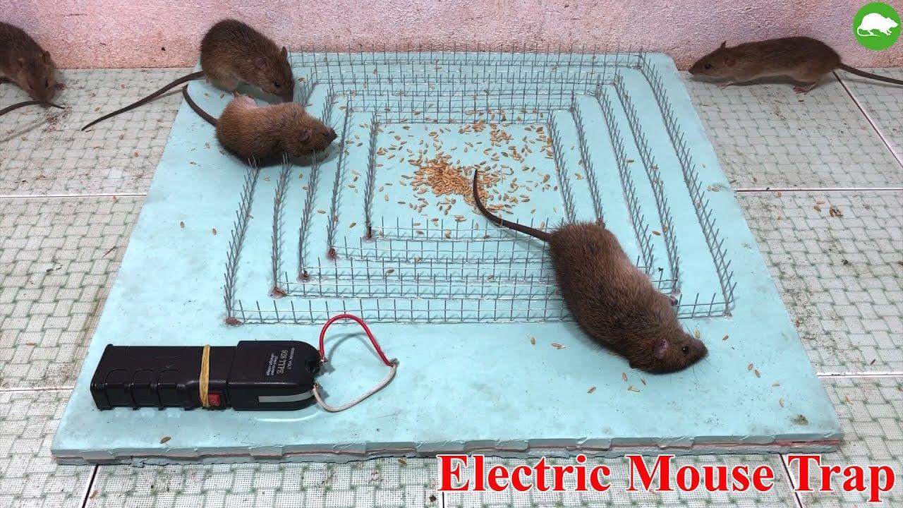 Shock Electric Baton Stun Gun Mouse Trap/DIY to make A Mouse Trap Homemade/Idea Mouse Trap