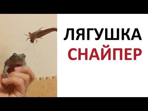 Лютые видосы. Лягушка – СНАЙПЕР