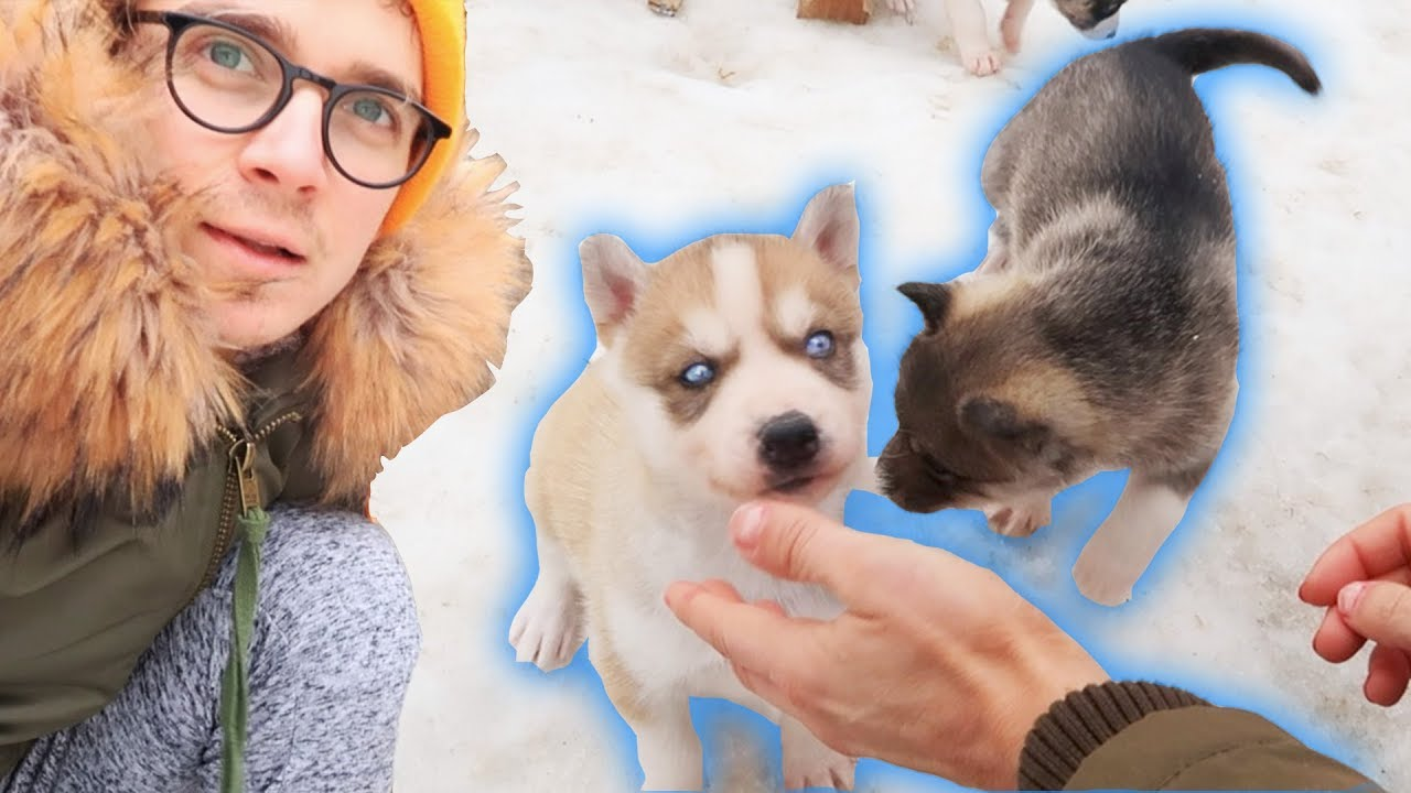 Try not to say 'AWW' Challenge (IMPOSSIBLE)