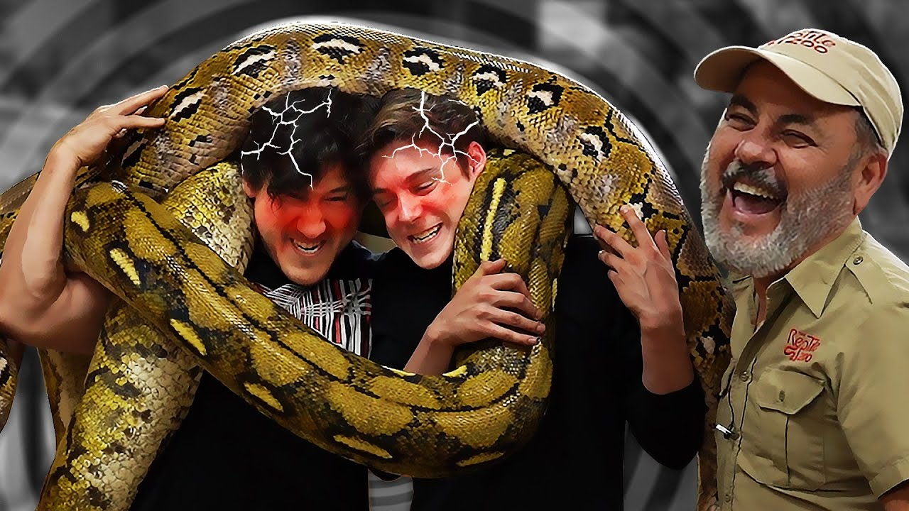 2 Idiots Get Crushed by 18-Foot Giant Snakes
