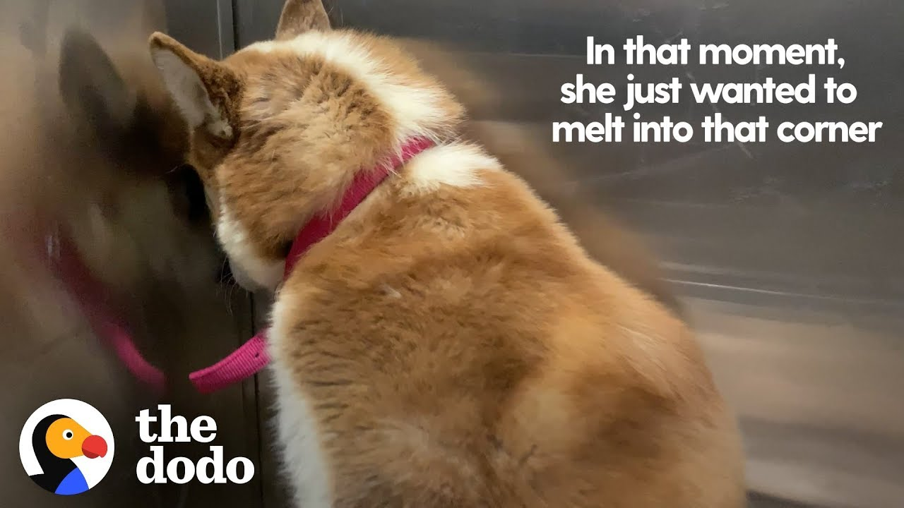 Dog Who Wanted To Hide From The World Learns To Let Love In | The Dodo