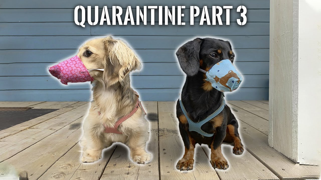 Ep#3: Quarantine Part 3 – WE'RE FREE! (Well, almost…)