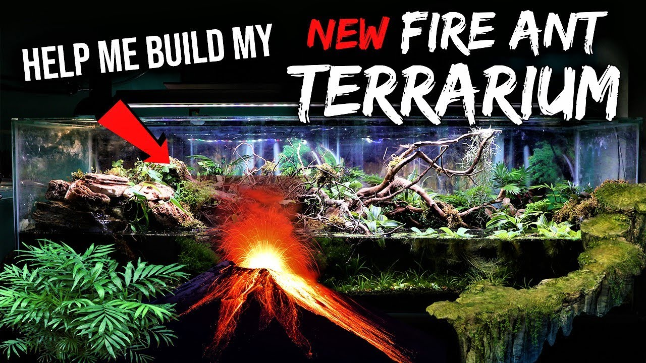 HELP ME BUILD A MASSIVE TERRARIUM FOR FIRE ANTS | Part 1: Choosing a Design
