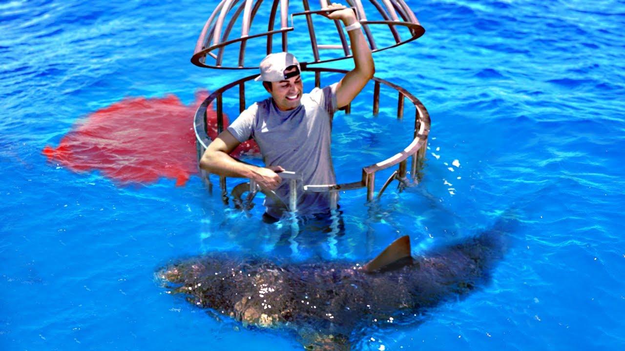 Shark Attack Test- Human Blood vs. Fish Blood