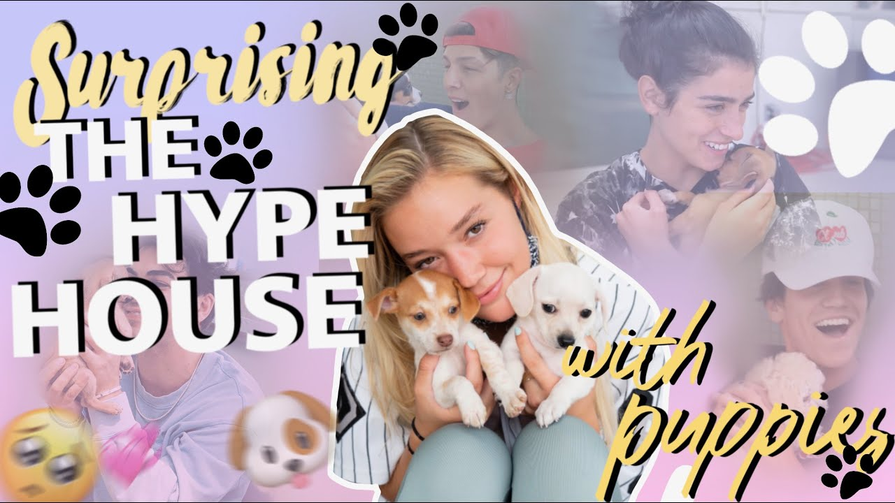 SURPRISING HYPE HOUSE WITH PUPPIES