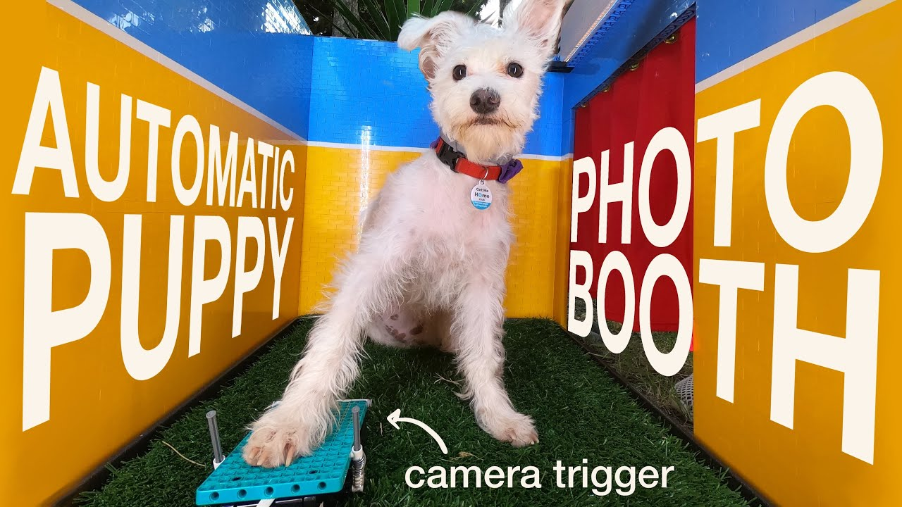 Dogs can take selfies now