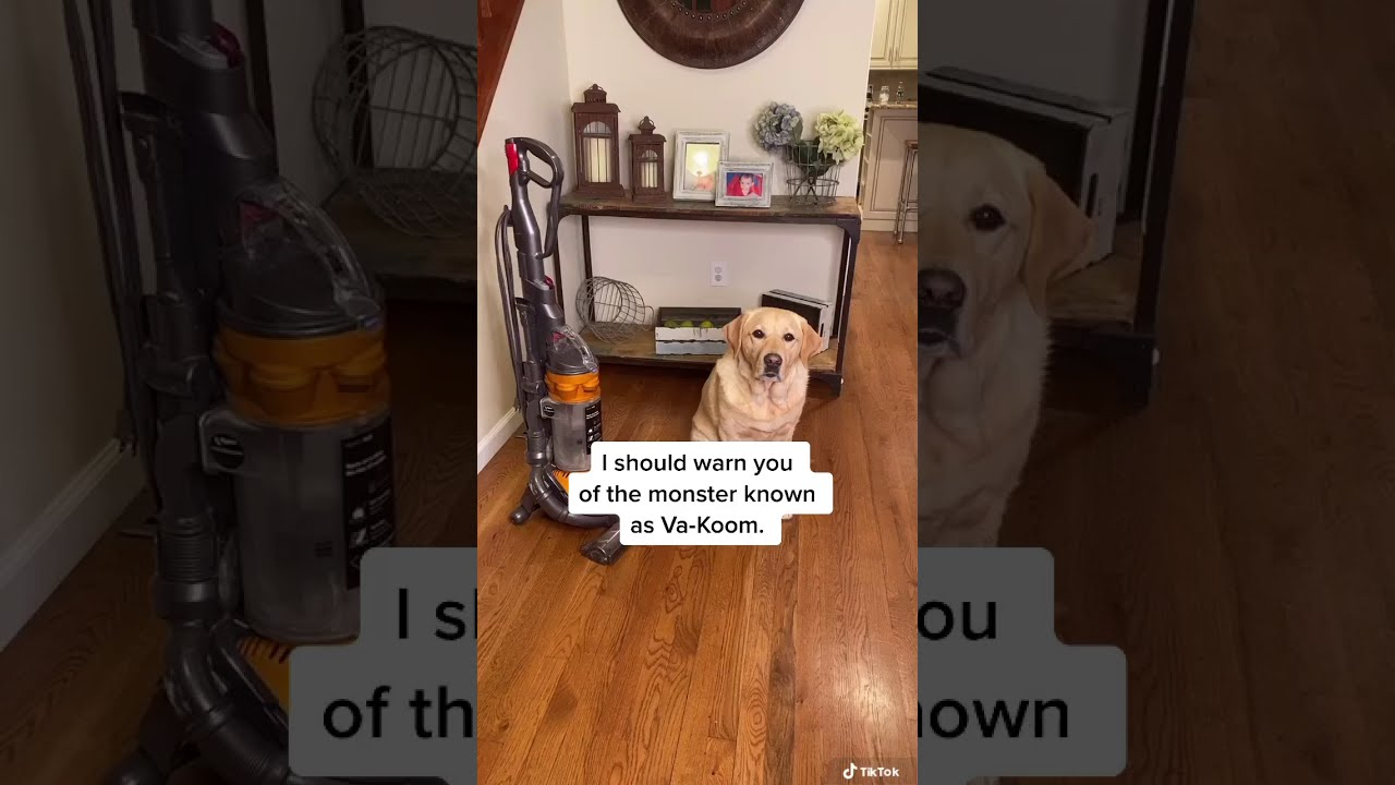 How does your dog react around a vacuum?