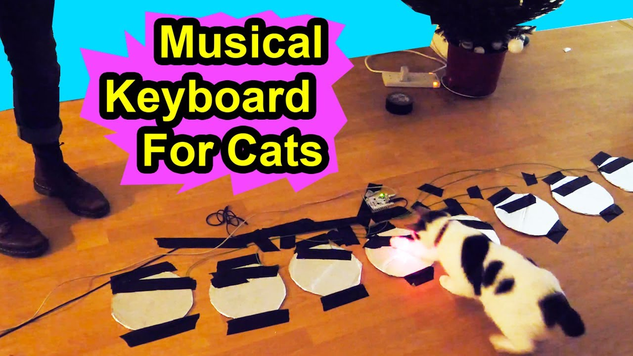 Musical Keyboard For Cats – Make Your Cat A Musical Virtuoso – YOUTUBE SECRET SANTA