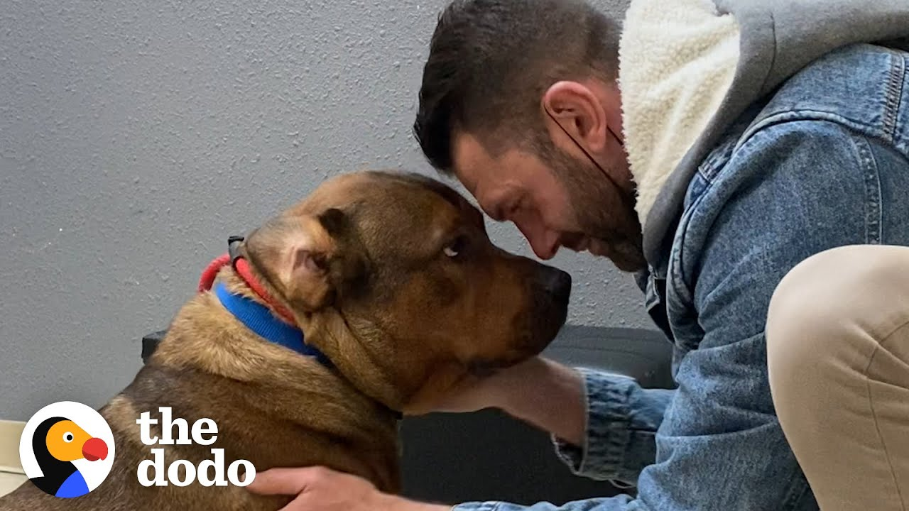 Guy Promises He's Not Going To Keep His Foster Dog… | The Dodo Foster Diaries